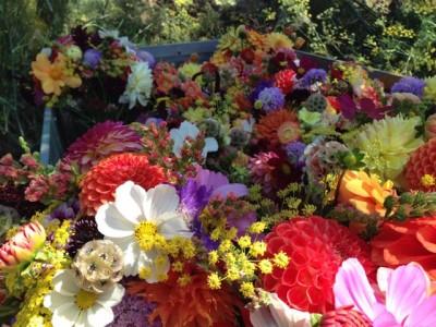flowers08