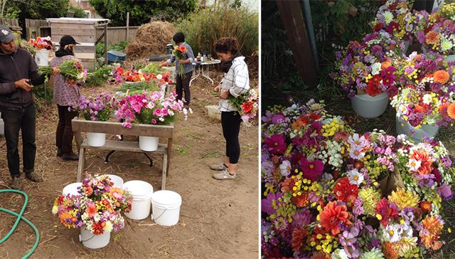 flower internship